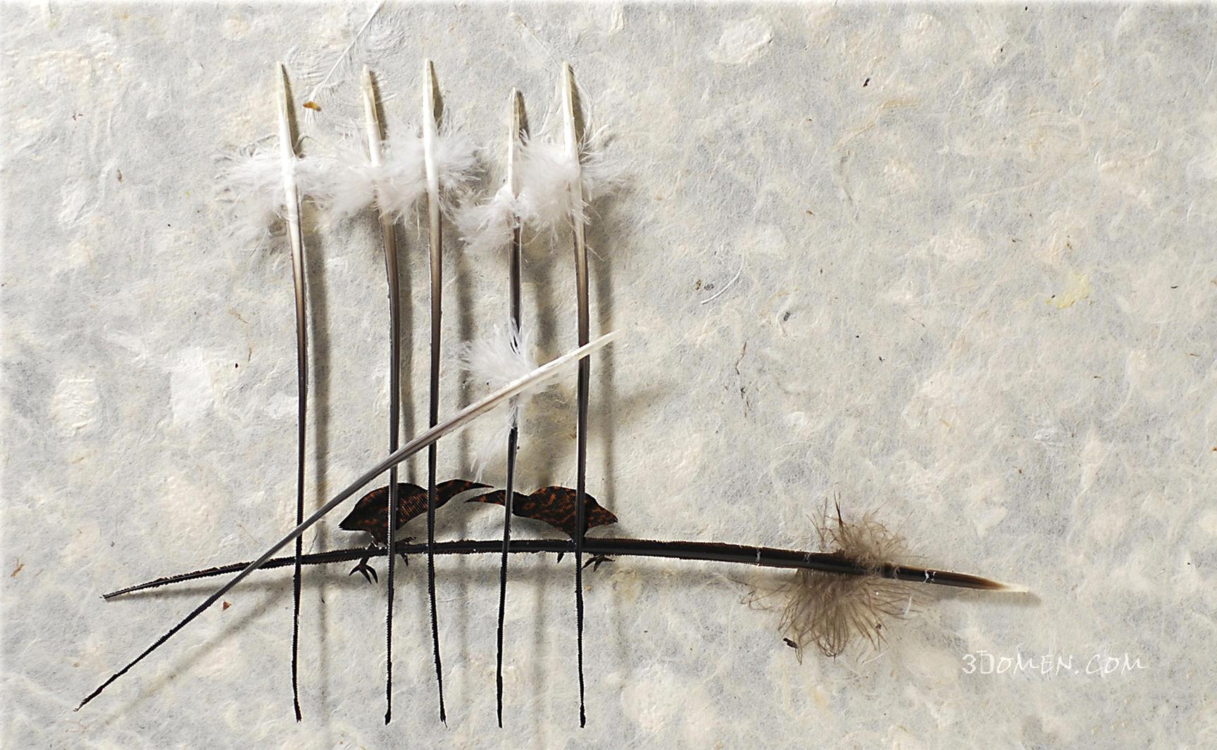 Искусные операции на птичьих перьях