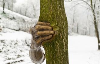 Деревья Джузеппе Пеноне