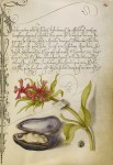 Иллюстрация | Mira Calligraphiae Monumenta