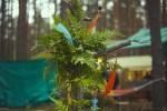 Репортаж | Forest Quest | © Елена Уколова | 05