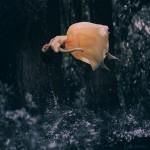 Фотография | Анка Журавлева | Distorted Gravity | 05