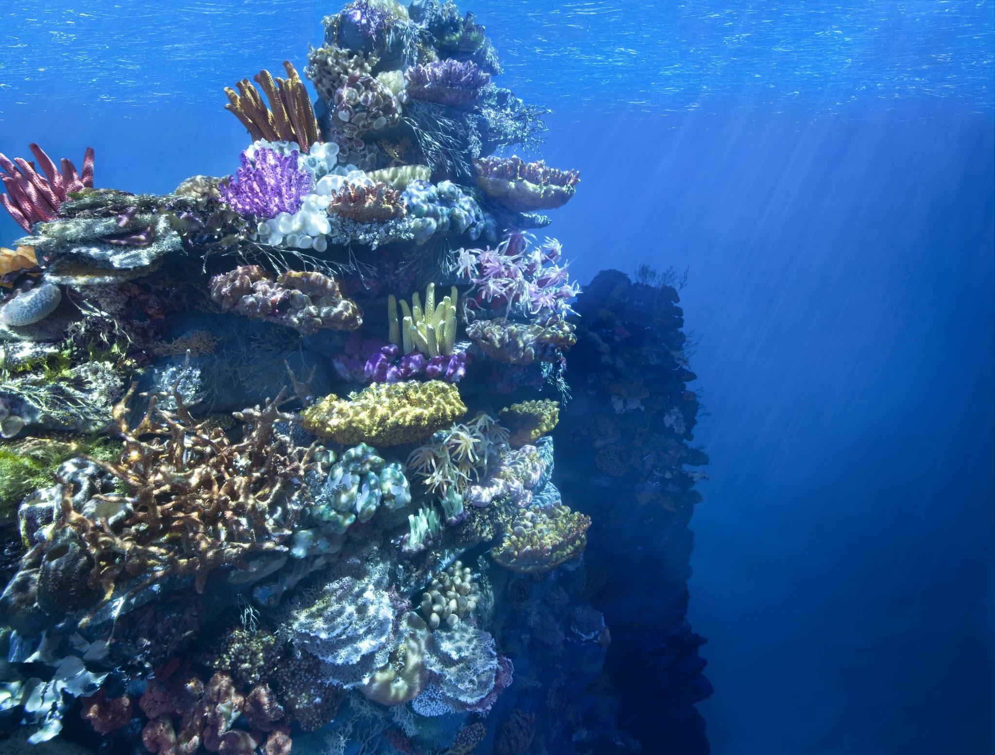 How to Breathe Underwater. © Matthew Albanese
