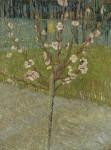 Живопись | Винсент ван Гог | Миндаль в цвету. Апрель, 1888