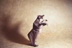 Оригами | Gonzalo García Calvo | Grizzly Bear