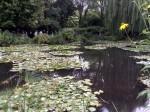Репортаж | Живерни Клода Моне | Водяные Лилии