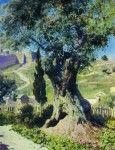 Живопись | Василий Поленов | Олива в Гефсиманском саду, 1882