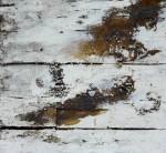 Живопись | Joseph Beuys | Естествознание, 1964-1982
