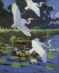 Живопись | Frank Weston Benson | Great White Herons, 1923