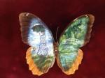 Творчество | Christiam Ramos | Butterflies | Клод Моне