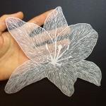 Творчество   Maude White   Серия Floral Works