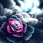 Цифра | Сильвия Кордедда | Rose of the Dusk