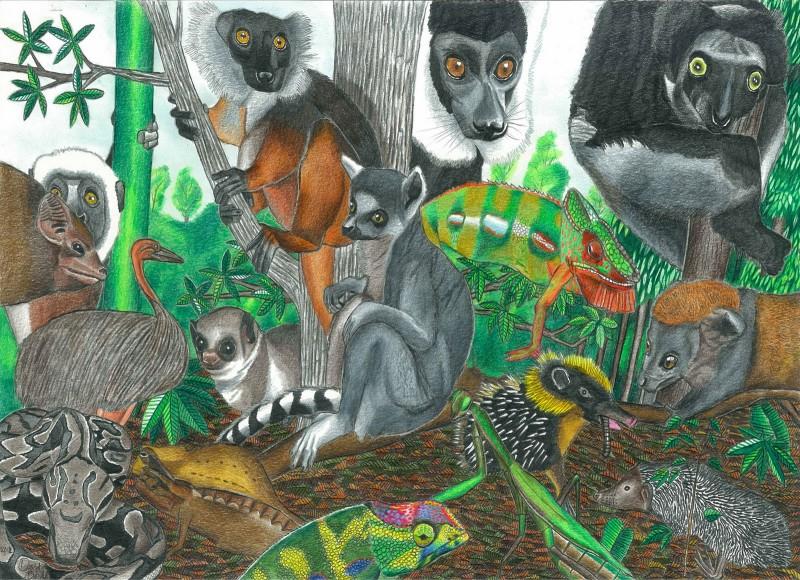 Животный мир Дэвида Барта