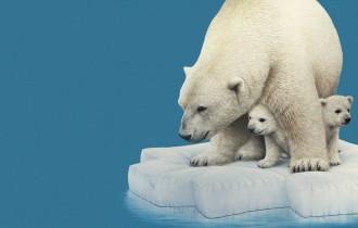 Марсель Витте                   «Миграция белых медведей»