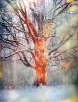 Живопись | Стивен Холл | Winter Tree