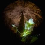 Фотография | Егор Никифоров | Spring Rain