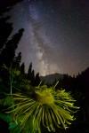 Фотография | Егор Никифоров | The Sun in the Night