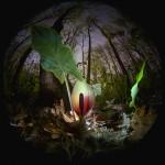 Фотография | Егор Никифоров | Under the Canopy of Spring Forest