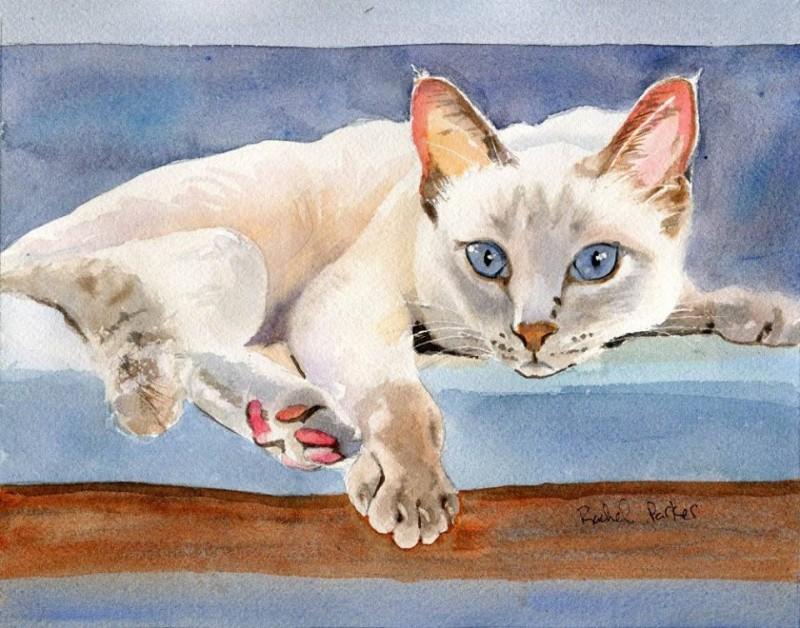 Кошачьи портреты Рэйчел Паркер