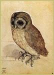 Живопись | Альбрехт Дюрер | Маленькая Сова, 1506