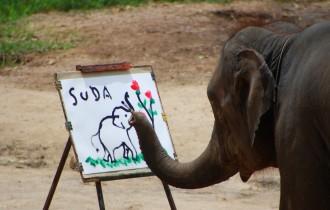 Слониха Написала Свой Автопортрет