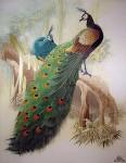 Творчество   Сучжоуская вышивка