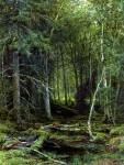 Живопись | Иван Шишкин | Лесная глушь, 1872