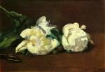 Живопись | Эдуард Мане | Белые пионы, 1864