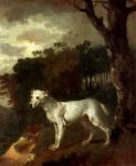 Живопись_Томас Гейнсборо_Bumper, a Bull Terrier, 1745