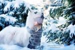 Фотография | Елена Карнеева