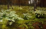 Живопись | Исаак Левитан | Папоротники в лесу, 1895