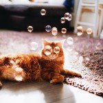 Фотография | Кристина Макеева