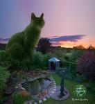 Фотография | Рич Сондерс | Топиаровый кот