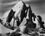 Фотография | Ансел Адамс | In Joshua Tree National Monument, 1942