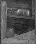 Иллюстрация | Теодор Киттельсен | Чёрная смерть | Чума на ступенях