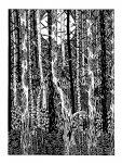 Графика | Lida Litle | Forrest