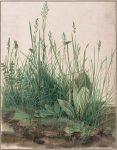 Акварель | Альбрехт Дюрер | Большой кусок дерна, 1503
