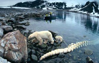 Белое безмолвие. Artifex в Арктике