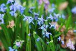 Выставки | Весенний фестиваль цветов